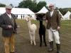 alpacas (2)