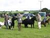 wensleydaleshow2011-2