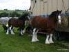 wensleydaleshow2011-3