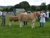 wensleydaleshow2011-6